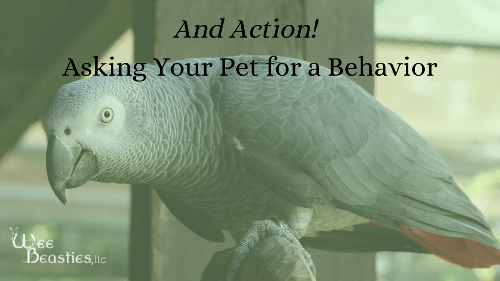 Headline image: African gray parrot with words And action! Asking your pet for a behavior