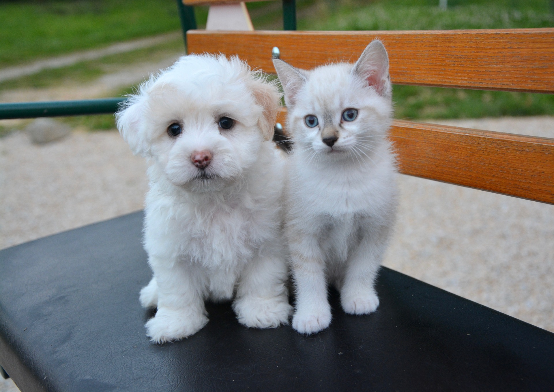 Puppy and kitten on bench. Young animals benefit from early socialization and pet training