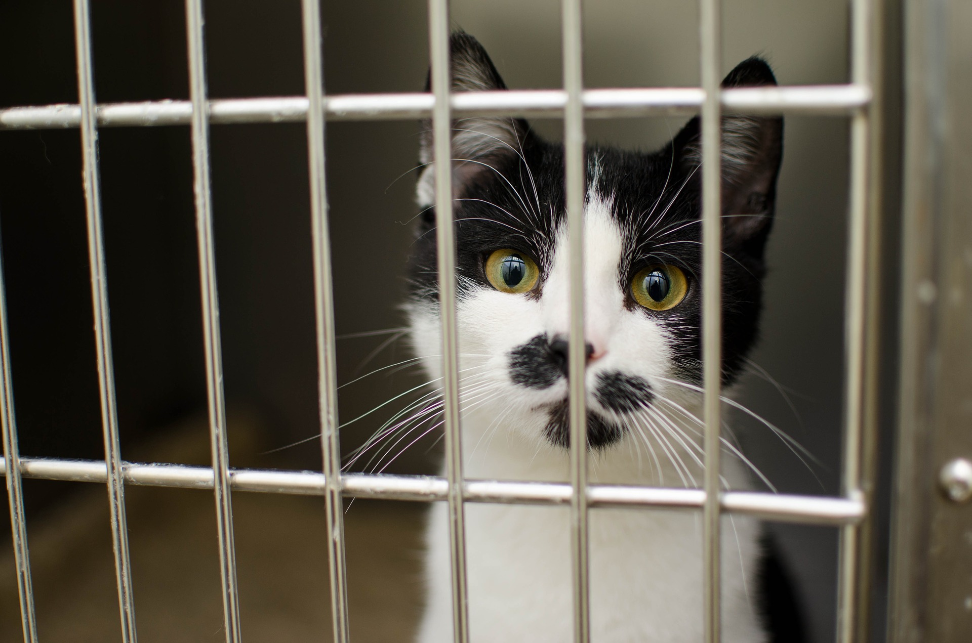 Image of cat in cage; training can make cats more adoptable