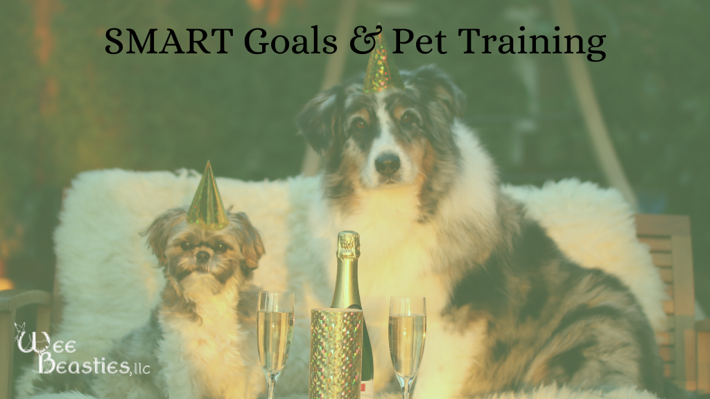 Two dogs with party hats at new year party