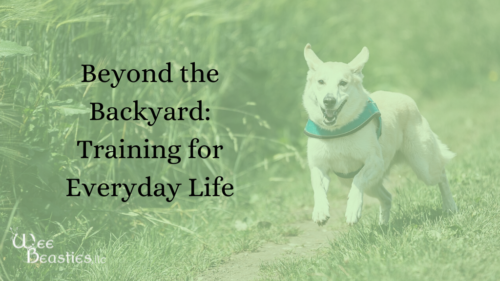 Dog running in grass with blog title to left