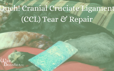 Ouch! Cranial Cruciate Ligament (CCL) Tear & Repair