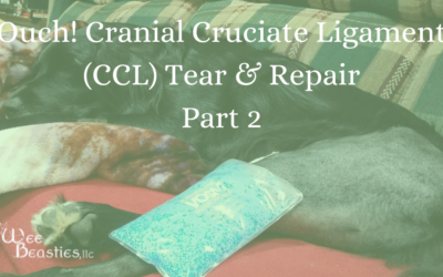 Ouch! Cranial Cruciate Ligament (CCL) Tear & Repair, Part 2