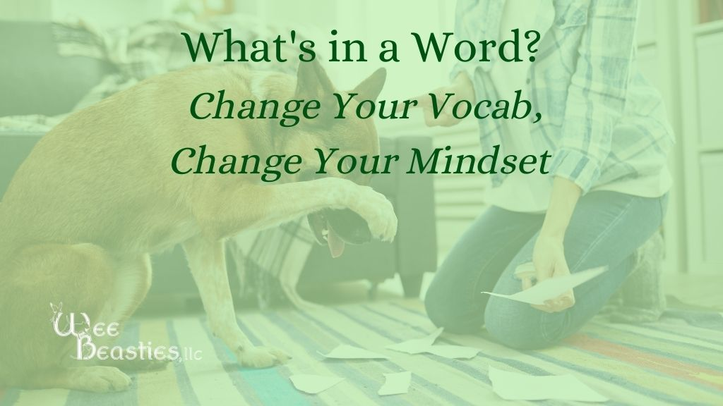 """What's in a word? Change your vocab, Change your mindset"" on a background with a dog with his paw over his face and a woman shaking her finger at him"