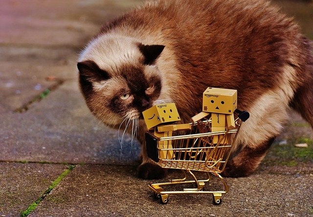 Siamese cat looking at cardboard figures in a shopping cart