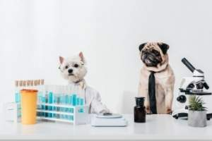 two dogs in a lab with scientific equipment