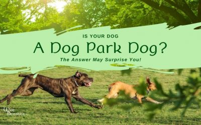Is Your Dog a Dog Park Dog? The Answer May Surprise You!