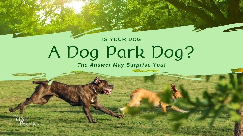 "Two dogs playing in a dog park with ""Is your dog a dog park dog?"" on top"