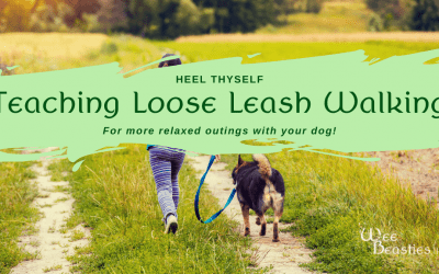 Heel Thyself: Teaching Loose Leash Walking