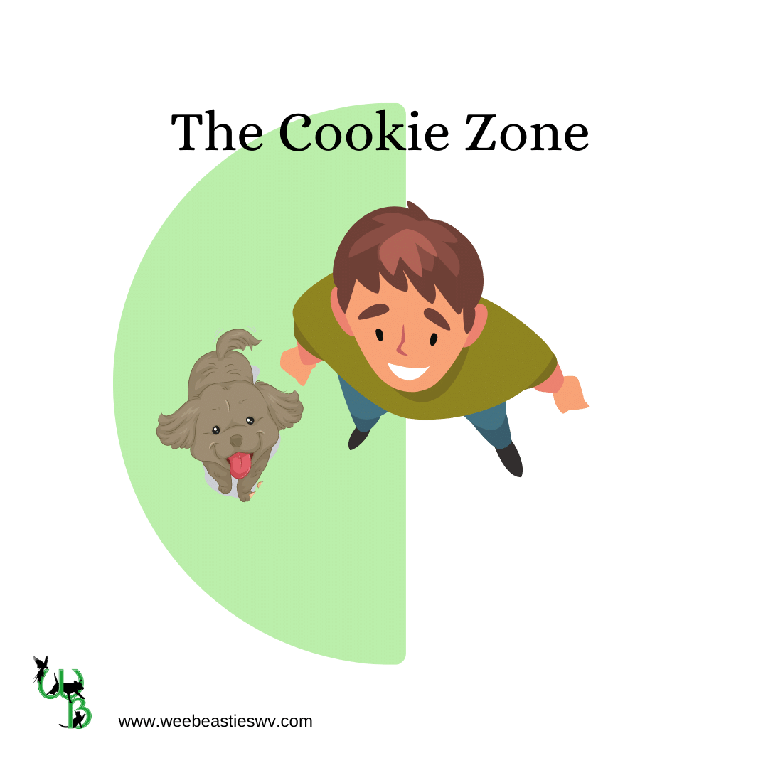 Illustration of man and dog looking up with a half circle starting at the man's midline and going out in an arc to show where treats should be given for loose leash walking