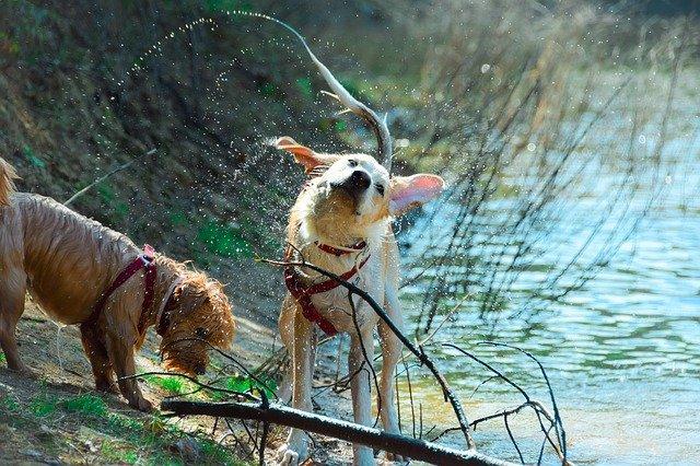Two dogs enjoying a hike near a lake