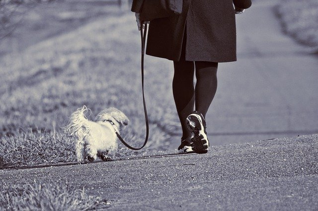 A woman loose leash walking her dog with a nice j-shape in her leash