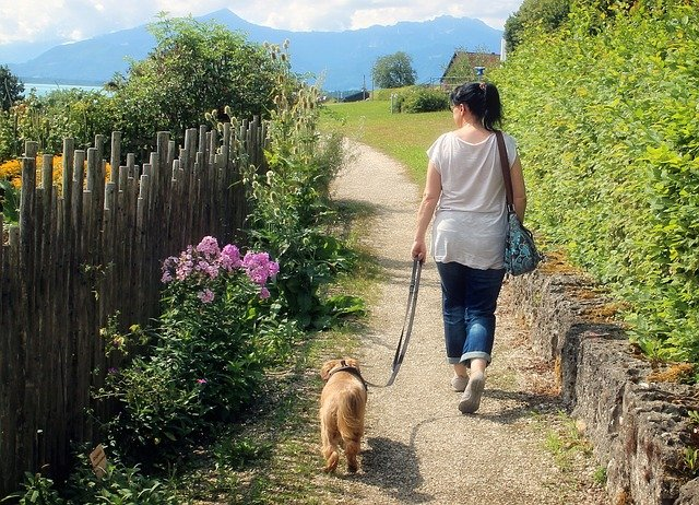 dog walking next to woman with leash loose creating the j shape for loose leash walking