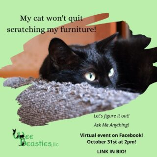 Ask Me Anything...on pet training and behavior anyway! (Not just for cats!) Online on Facebook this Saturday, Oct 31 @ 2pm EST #positivereinforcementtraining #dogtrainingpaysoff #catscanbetrained #dogtrainingisfun #woofstagram #meowstagram