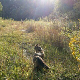 Anyone else missing the sunshine? #tabbycatlove #tabbycatsofinstagram #domorewithyourcat #catsofwv #westfurginia
