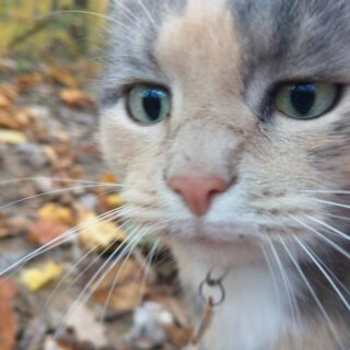 What is this thing you're pointing at me? #happyfall #calicocatsofinstagram #calicolove #meowstagram #catsofwv #westfurginia #lovewv